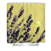 Butterfly On Lavender Flowers Shower Curtain