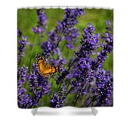Butterfly On Lavender Shower Curtain