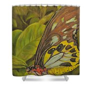 Butterfly On Leaves Shower Curtain