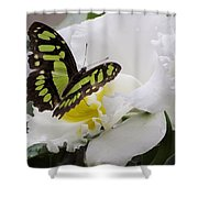 Butterfly On Orchid Shower Curtain