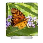Butterfly On Purple Shower Curtain