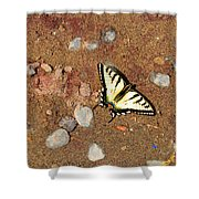 Butterfly On The Beach Shower Curtain