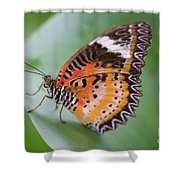 Butterfly On The Edge Of Leaf Shower Curtain by John Wadleigh