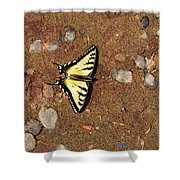 Butterfly On The Sand Two  Shower Curtain