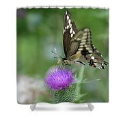 Butterfly On Thistle Flower Shower Curtain