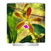 Butterfly Orchid - Encyclia Tampensis Shower Curtain