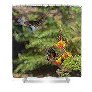 Butterfly Pas De Deux Shower Curtain