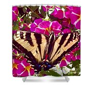 Swallowtail Butterfly Pink Shower Curtain