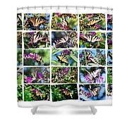 Butterfly Plethora I Shower Curtain
