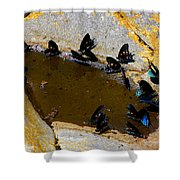 Butterfly Pool Shower Curtain