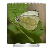 Butterfly Profile Shower Curtain
