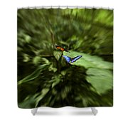 Butterfly Race Shower Curtain