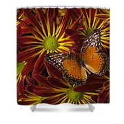 Butterfly Resting On Chrysanthemums Shower Curtain