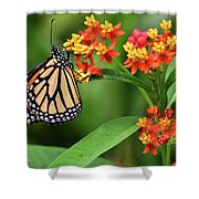 Butterfly Resting On Flower Shower Curtain