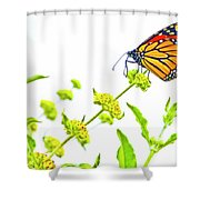 Butterfly Series #10 Shower Curtain