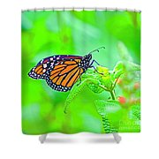 Butterfly Series #13 Shower Curtain