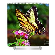 Butterfly Series #8 Shower Curtain
