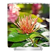 Butterfly Snack Shower Curtain