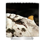 Butterfly Standing On Rock Shower Curtain