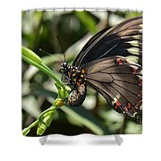 Butterfly Surprises Shower Curtain