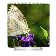 Butterfly Tea Time Shower Curtain