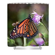 Butterfly - The Monarch  Shower Curtain