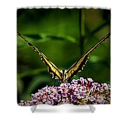 Butterfly Victory Shower Curtain