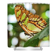 Butterfly Watching Shower Curtain