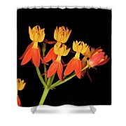 Butterfly Weed Shower Curtain