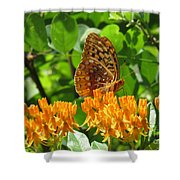 Butterfly Weed Fritillary Shower Curtain