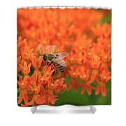 Butterfly Weed Heaven Shower Curtain