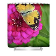 Butterfly Whispers Shower Curtain