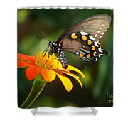 Butterfly With Orange Flower Shower Curtain
