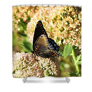 Butterfly1 Shower Curtain