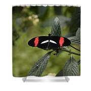 Butterfly4 Shower Curtain