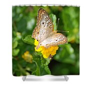 Butterflywith Dots Shower Curtain
