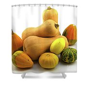 Butternut Squash With Gourds  Shower Curtain