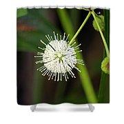 Button Bush Shower Curtain