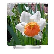 Button Daffodil Shower Curtain