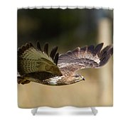 Buzzard In Flight Shower Curtain
