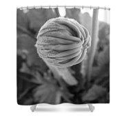 Bw Bud Shower Curtain