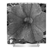 Bw Flower Shower Curtain