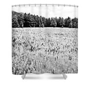 Bw Meadow Shower Curtain