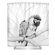 Bw Parrot Shower Curtain