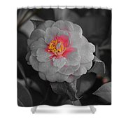 Bw Pink Rose Shower Curtain