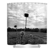 Bw Thistle  Shower Curtain