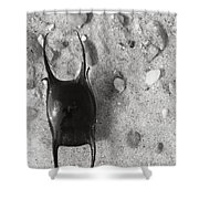 bw1 Shower Curtain