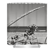 Bw8 Shower Curtain