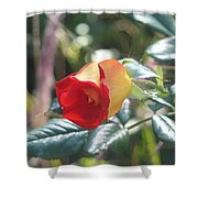 By Any Other Name Shower Curtain