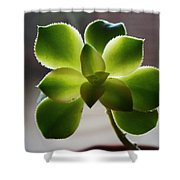 By The Window Pane Shower Curtain